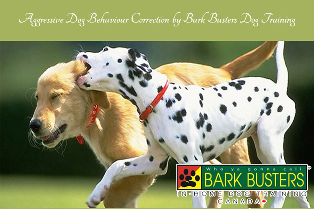 Correction by Bark Busters Dog Training