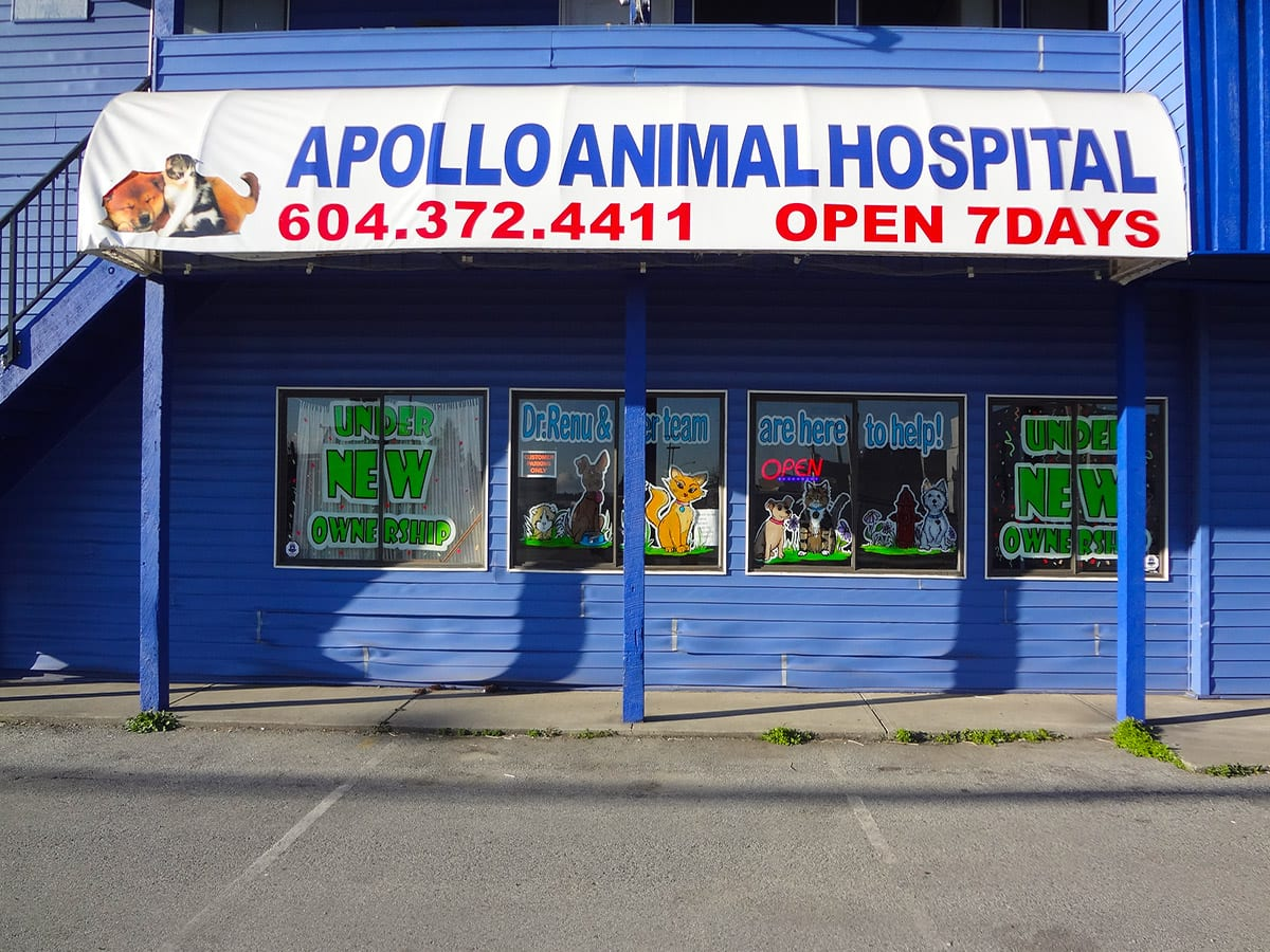 Apollo Animal Hospital in Surrey