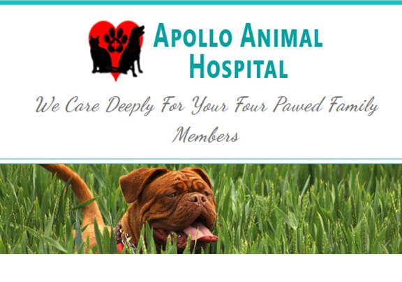 Apollo Animal Hospital on Best In BC